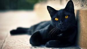 черный-кот-4